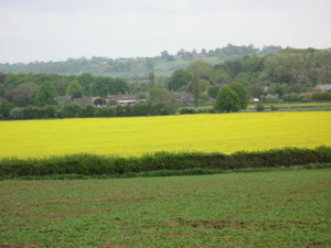 photo-1-looking-towards-ashwell